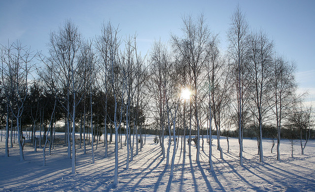 The snow and the birch